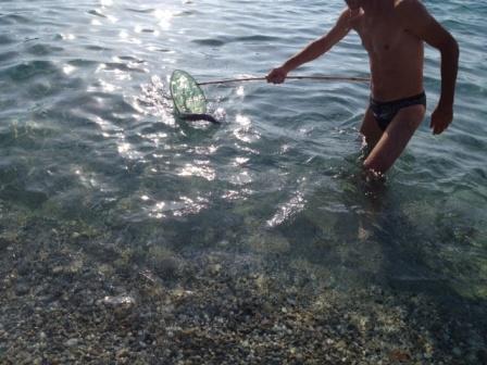 La Pericolosissima Murena Pescata Morta In Riva Al Mare Alla