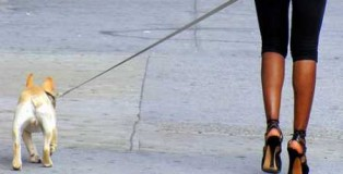 Cane-al-guinzaglio-di-padrona-con-tacchi-altissimi