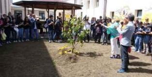 albero piantato al piria di rosarno