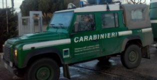 20170207-carabinieri-forestali-430x323